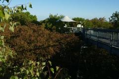 Baumkronenpfad (6)