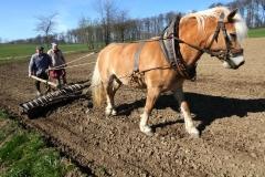 150415 Bauer mit Pferd (11)