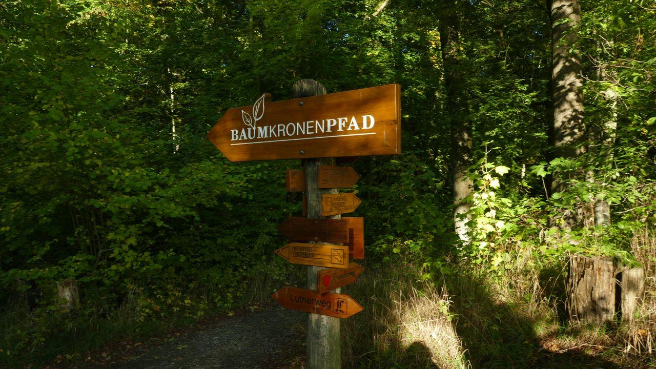 Nationalpark Hainich Baumkronenpfad (2)